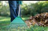 Limpieza de jardines (huelva) - foto