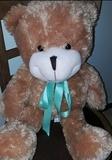 oso de peluche - foto