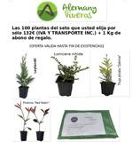 PACK DE SETO 100 PLANTAS (132  IVA INC) - foto