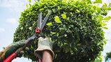 Jardinero/ Mantenimiento Piscina - foto