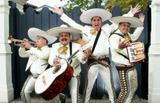 Mariachis mexicanos Haro 683.270.443 - foto