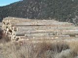 Explotacion forestal - foto