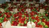 fruta y verdura a precio almacen - foto