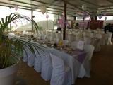 comuniones bautizos bodas celebraciones - foto