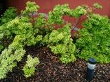 Jardineros en Lugo - foto