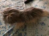 Perro de peluche gris - foto