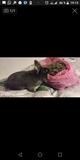 Cuido a tu animale:semana 50 e dia 5e - foto