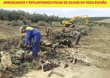 leña a mayoristas y particulares ESPAÑA - foto