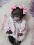 Mono reborn - foto