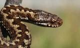 ¿problemas con serpientes? - foto
