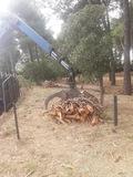 Trabajos forestales y jardinería en baro - foto