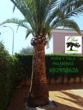 Poda tala y fumigaciÓn de palmeras - foto