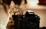 Reportajes fotográficos y de Vídeo - foto