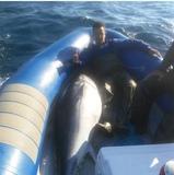 Salida de Pesca Atun, Popping, Jigging - foto