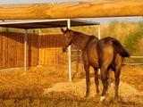 todo para caballos y fincas - foto