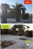 Podas y talas de Árboles y palmeras - foto