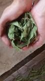 Hoja seca stevia - foto