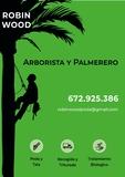 Poda y tala de palmeras y arboles - foto