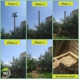 Poda y tala de Árbol y palmera - foto