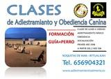 CLASES DE OBEDIENCIA CANINA - foto