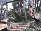 limpieza de parcelas y excavaciones - foto