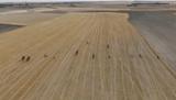 Fotos y vídeos con Drone - foto
