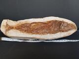 Fosil pez - foto