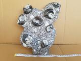 FOSILES ammonites - foto