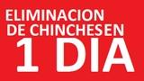Plagas: chinches cucarachas rata mÁlaga - foto