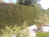 Buscas jardinero? - foto
