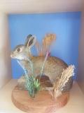 Conejo disecado - foto