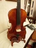Viola 15,5 - foto