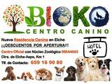 RESIDENCIA CANINA - HOTEL PERROS ELCHE - foto