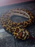 serpiente de cascabel de peluche - foto