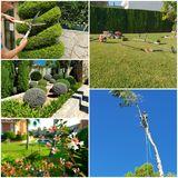 Jardinero profesional Mallorca - foto