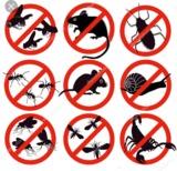 Control de plagas low cost - foto