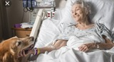 cuidadora de ancianos en hospital - foto