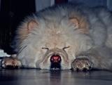 Fotógrafo mascotas - foto