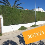 Servicios de Jardinería en Jaén - foto