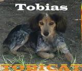 Perros de caza de conejos Tobías.TOBICAT - foto