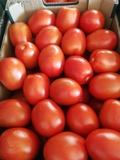 Corredor comercial de tomate en España - foto