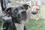 Sesion canina  . guauu - foto