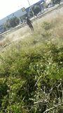Trabajos forestal y jardinería - foto