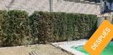 Servicios de jardineria en Jaen - foto