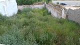Mantenimientos de jardines Linares - foto