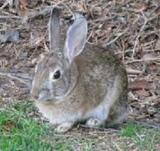conejos - foto