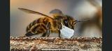Enjambre abejas rescate - foto