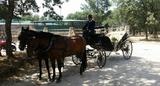 despedidas de soltero a caballo - foto