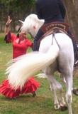 espectaculo baile flamenco y caballos - foto