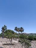 Se podan  palmeras  mantenimiento Jardin - foto